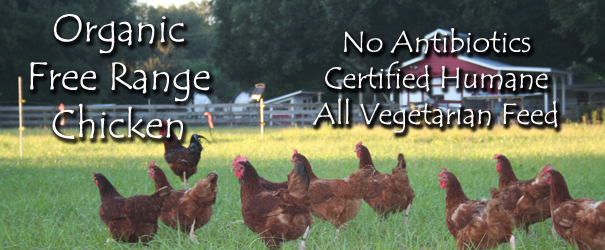 Why Organic Free Range Chicken?